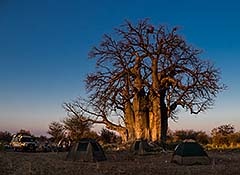 Kalahari-Wildniscamp
