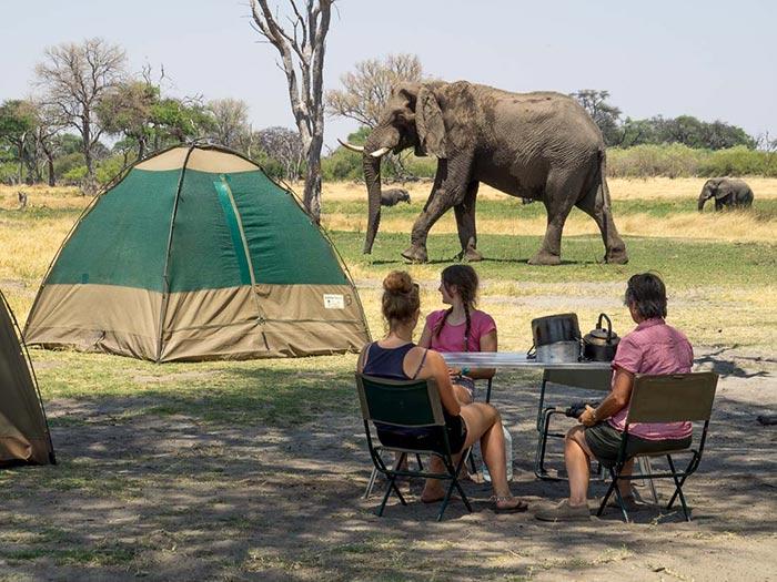 Elefant Newsletter
